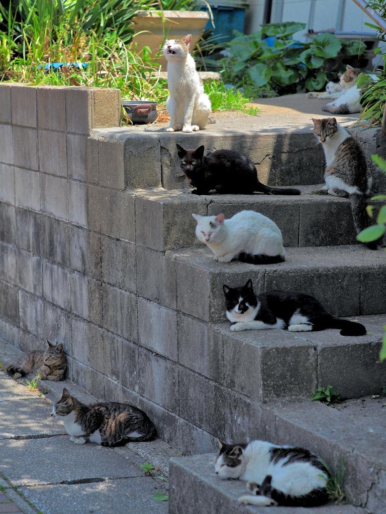 藍島の猫 20130513 #3