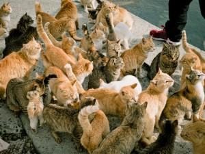 Aoshima-cat
