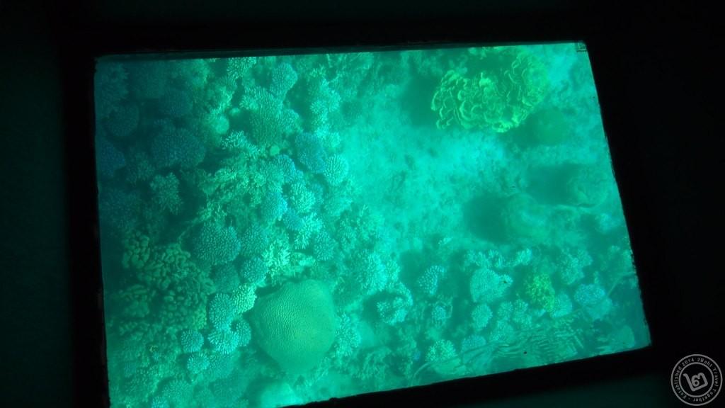 ปะการังเมืองแขกที่อัคคาบา