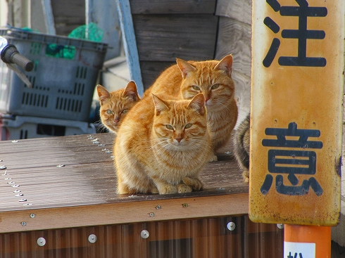 ภาพจาก http://piiiiiiiii.exblog.jp