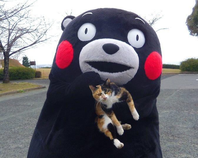 Kumamon กับแมว (ภาพจาก Facebook Kumamon)