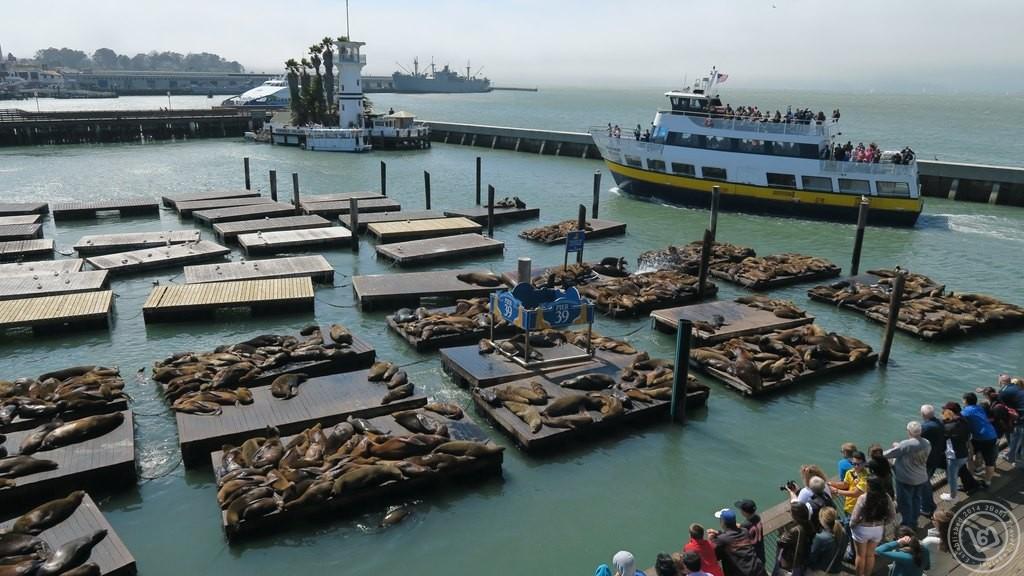 สิงโตทะเล Pier 39 มองจากชั้น 2