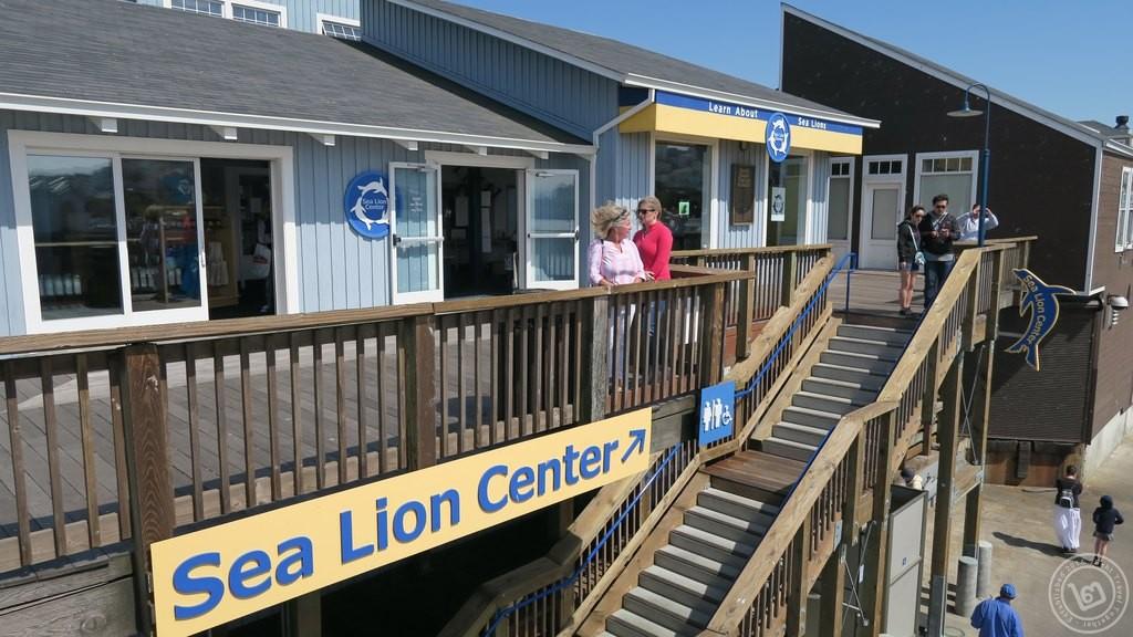 Pier 39 Sea Lion Center