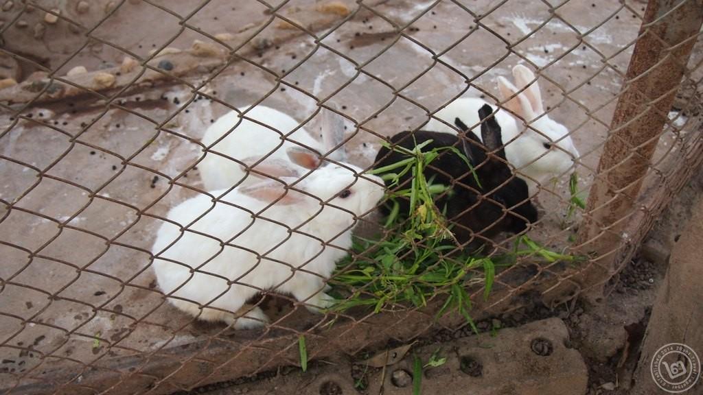กระต่าย วนาฟาร์ม