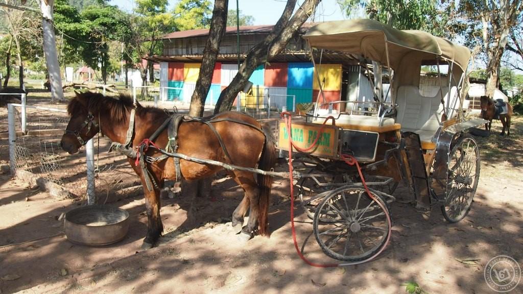 รถม้า วนาฟาร์ม