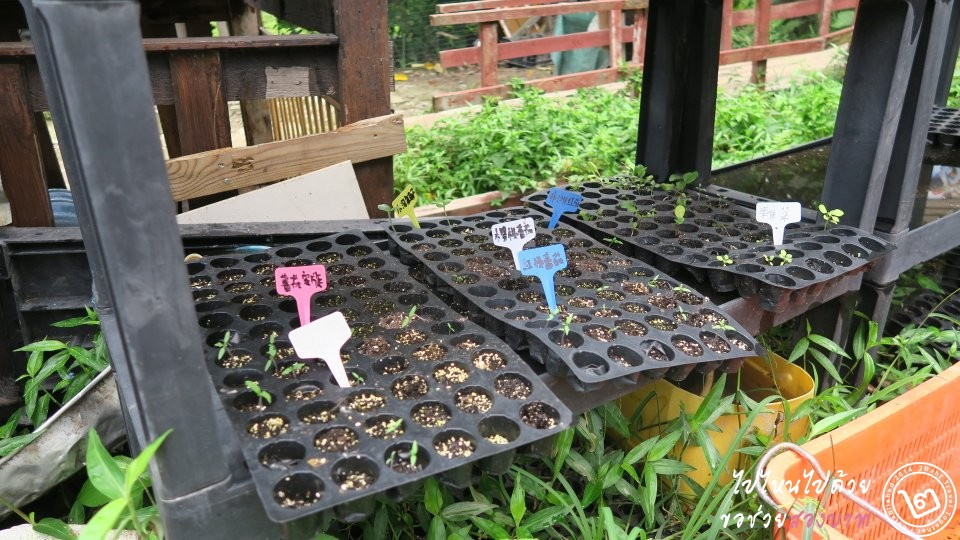 Hello Kitty Organic Farm แปลงอนุบาลผัก