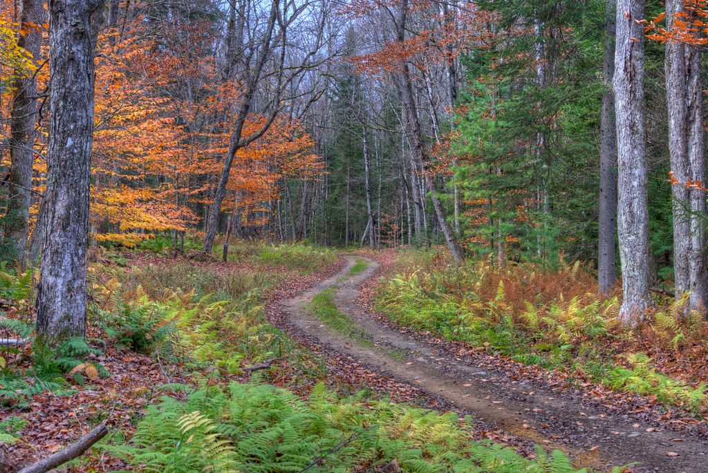 Autumn in Adirondacks / Flickr - Diana Robinson