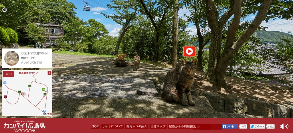 Cat Street View : Cat Community