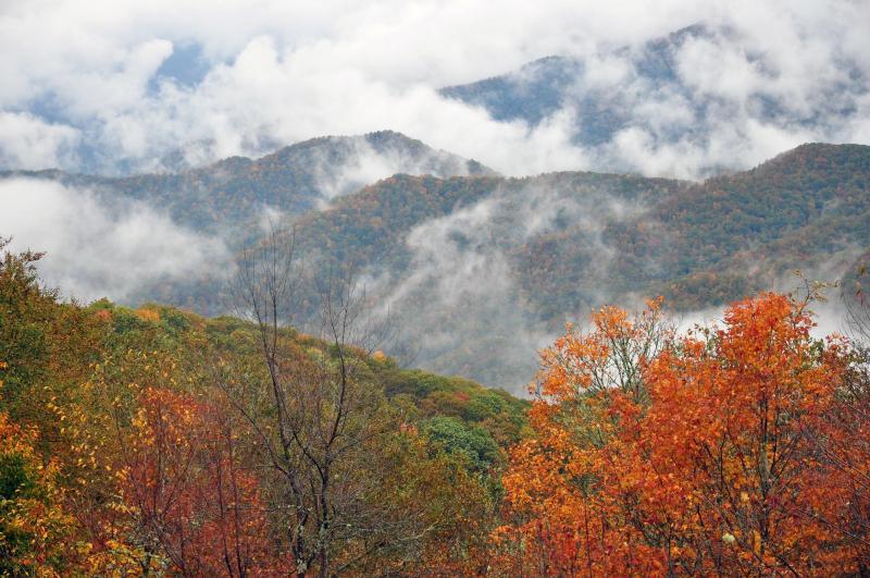 ใบไม้แดงที่อุทยาน Great Smoky Mountains National Park (ภาพจาก National Park Service)