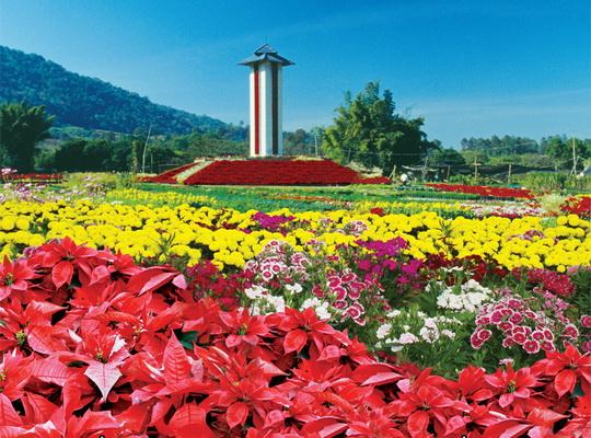 เทศกาลทะเลหมอกดอกไม้ ภูเรือ