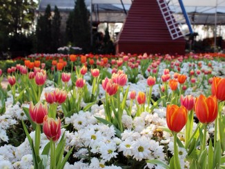 งานดอกไม้ปี 2557 ภาพจากอุทยานหลวงราชพฤกษ์