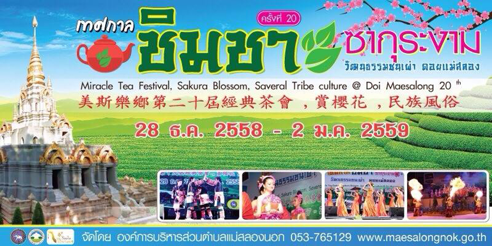 เทศกาลชิมชา ซากุระงาม ดอยแม่สลอง 2558-2559