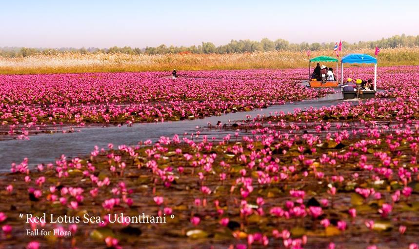 ทะเลบัวแดง หนองหาน ภาพจาก Facebook Amazing Thailand