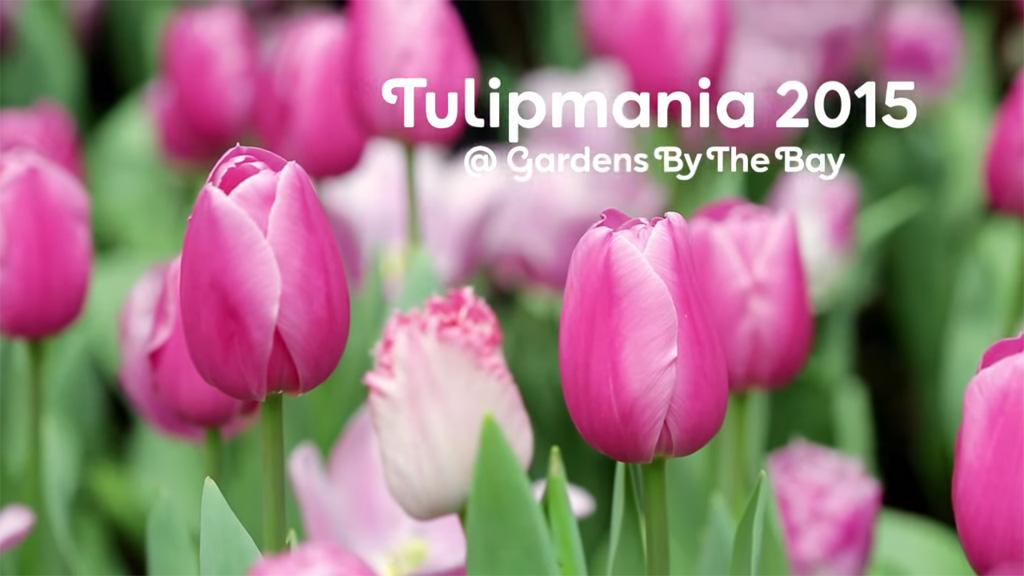 งาน Tulipmania 2015 ที่ Gardens by the Bay