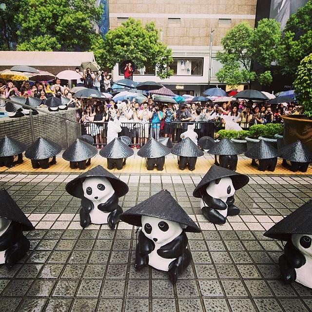 1600 Pandas ทำอย่างไรเมื่อโดนฝน ใส่หมวก?