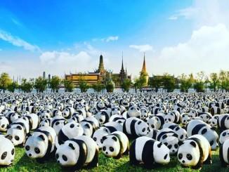 รู้จัก 1600 Pandas กำหนดการแสดง 10 แห่งทั่ว กทม.