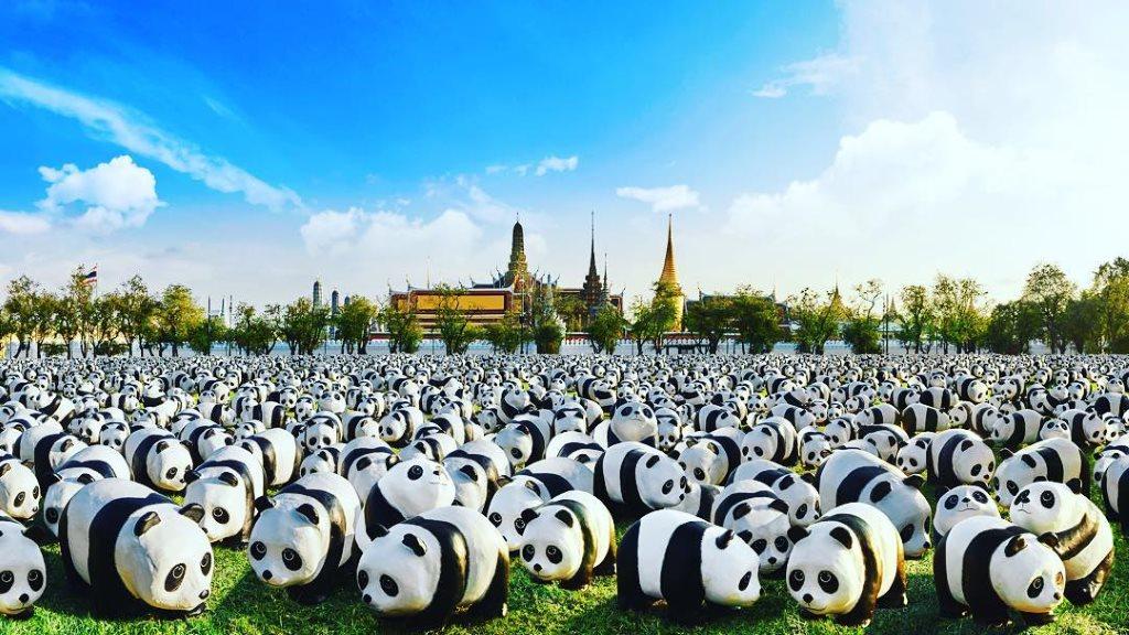 1600 Pandas TH