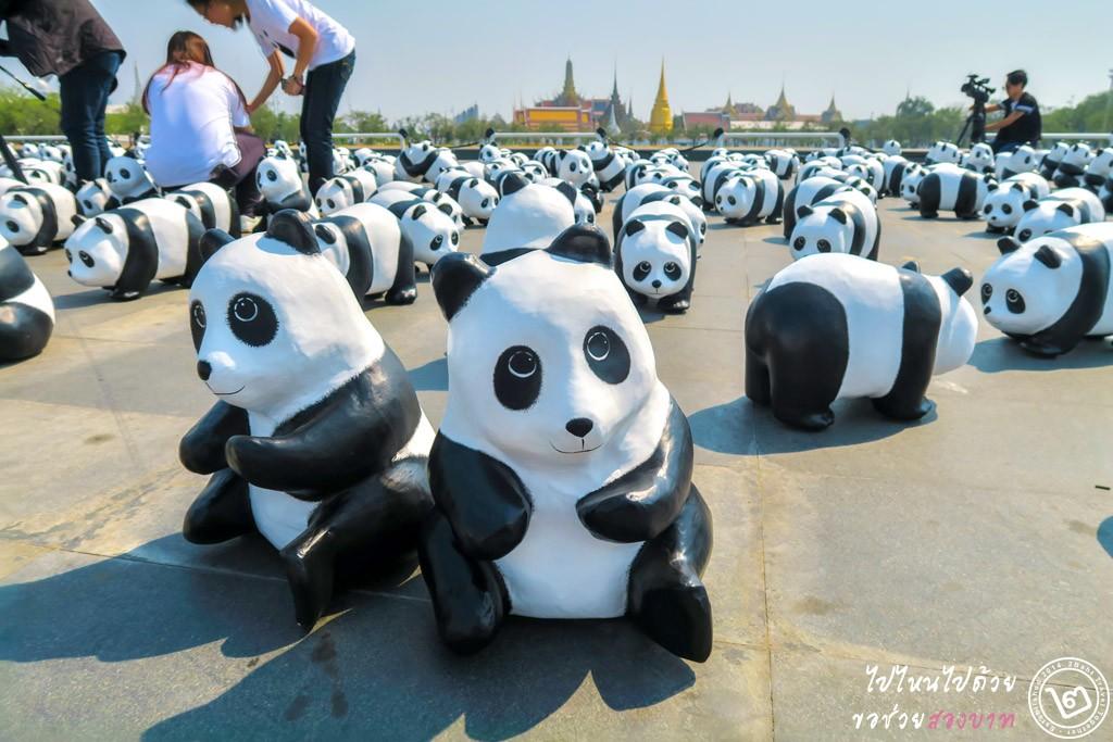 1600 Pandas+ TH สนามหลวง 4 มี.ค. 59