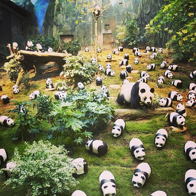 1600 Pandas พบกับพี่แพนด้าที่ Ocean Park ฮ่องกง