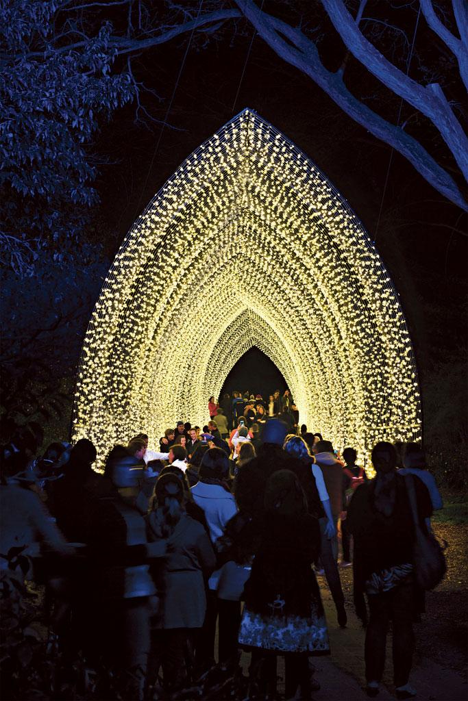 Royal Botanic Garden ,Vivid Sydney - Cathedral of Light