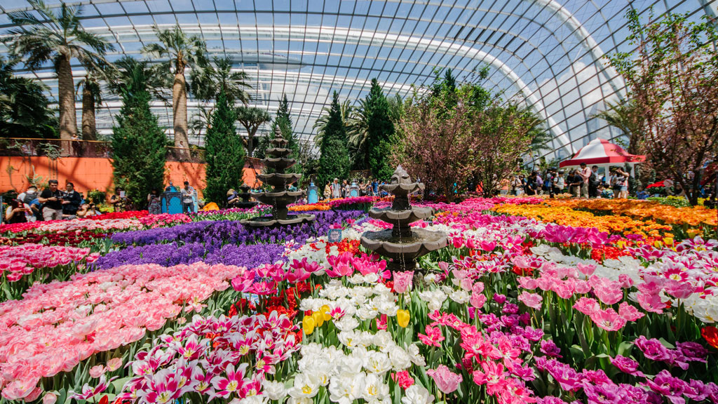 Tulipmania 2016, Gardens by the Bay สิงคโปร์