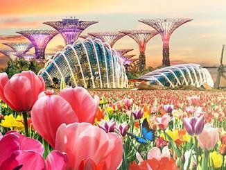 งาน Tulipmania จาก Gardens by the Bay