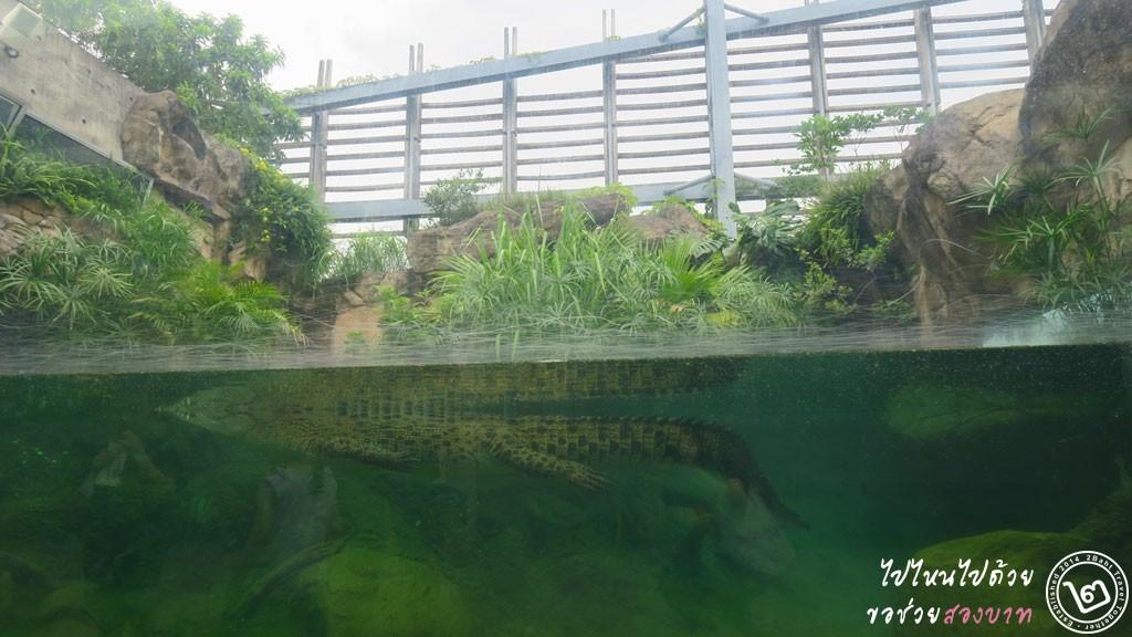 Pui Pui, Hong Kong Wetland Park