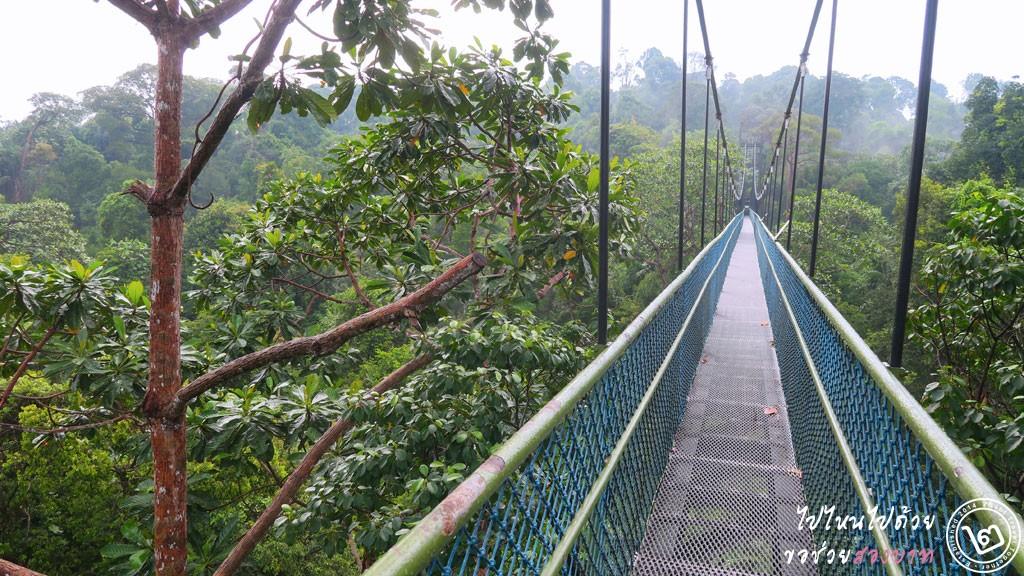เส้นทางเดินป่าสิงคโปร์ ชมวิวเหนือยอดไม้ที่ TreeTop Walk อ่างเก็บน้ำ MacRitchie