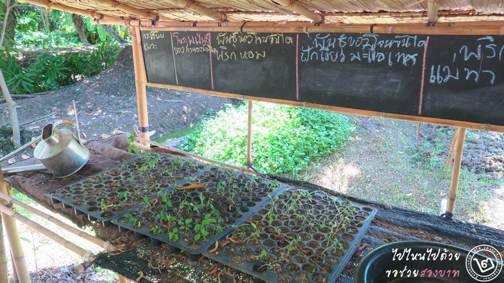 เมล็ดพันธุ์พืช เกษตรอินทรีย์