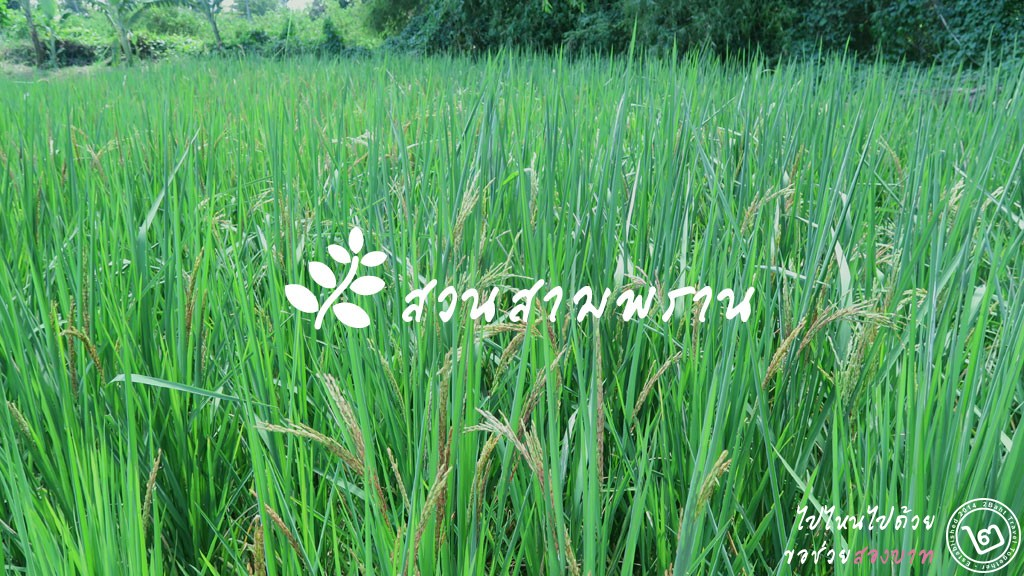 สวนเกษตรอินทรีย์ สวนสามพราน จ.นครปฐม
