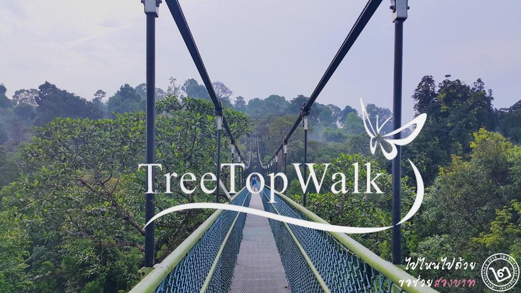 พาเดินป่าสิงคโปร์ ชมวิวเหนือยอดไม้ที่ TreeTop Walk อ่างเก็บน้ำ MacRitchie