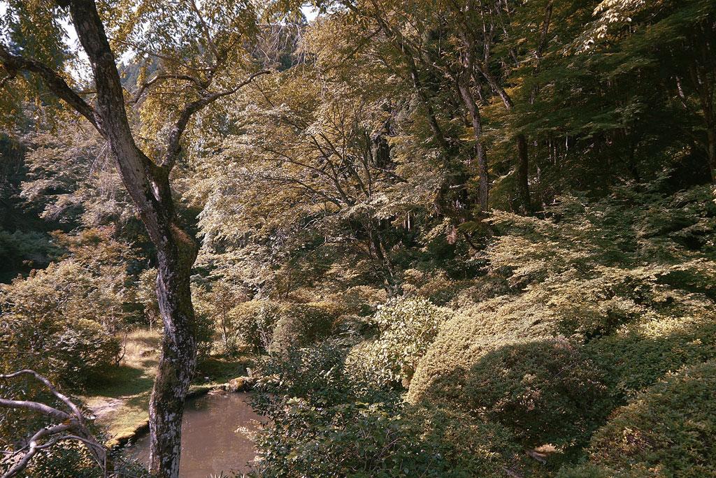 ไม้สนซีดาร์ หมู่บ้าน Yoshino ทางตะวันออกเฉียงใต้ของ Osaka ญี่ปุ่น